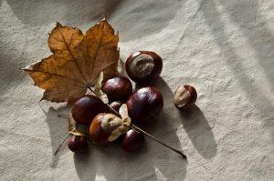 frutos_noviembre