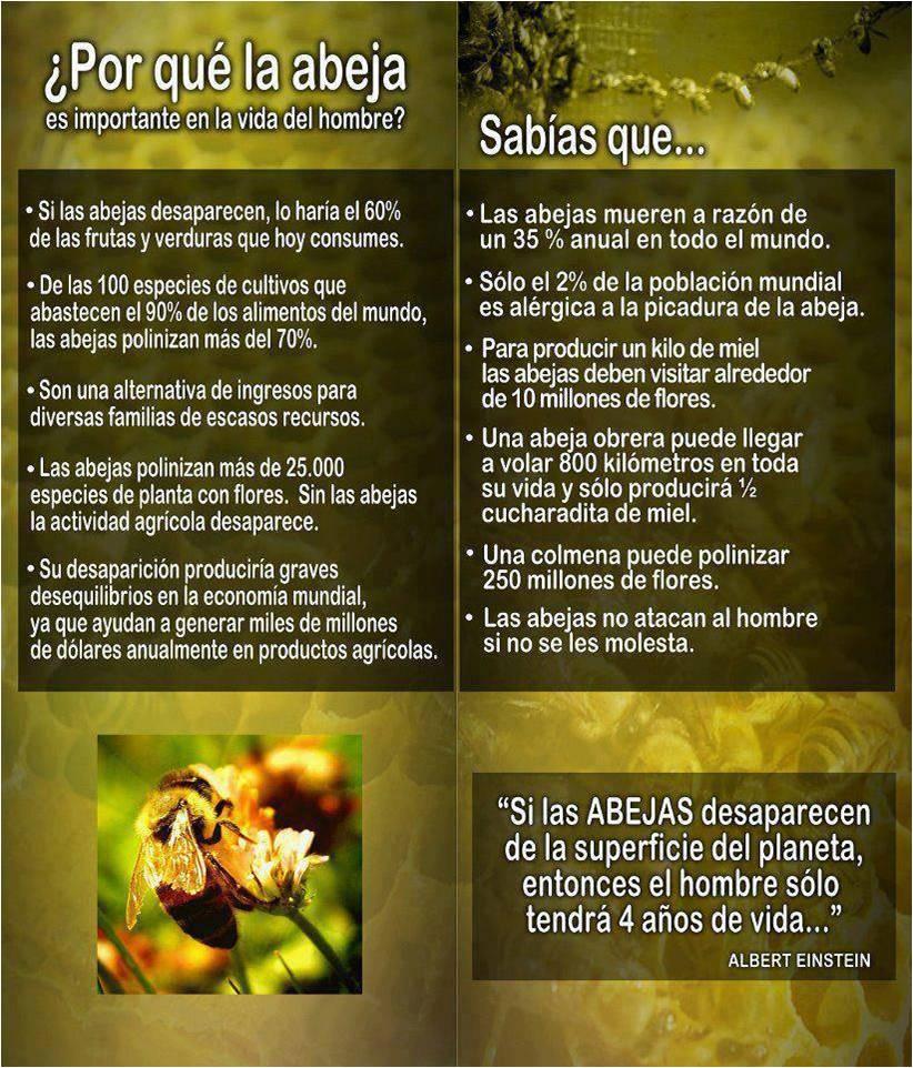 la_abeja