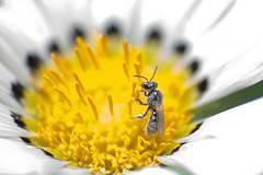 propiedades-del-polen