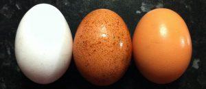 tipos-huevos